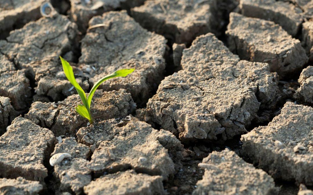 Planète Urgence et sa mission de volontariat à travers le monde