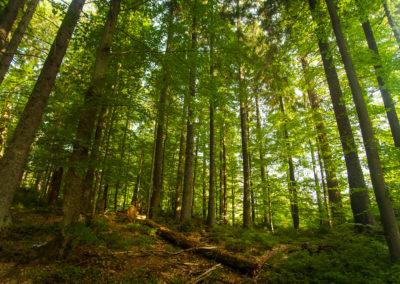 Investir dans une forêt grâce aux Groupements Forestiers d'Investissement