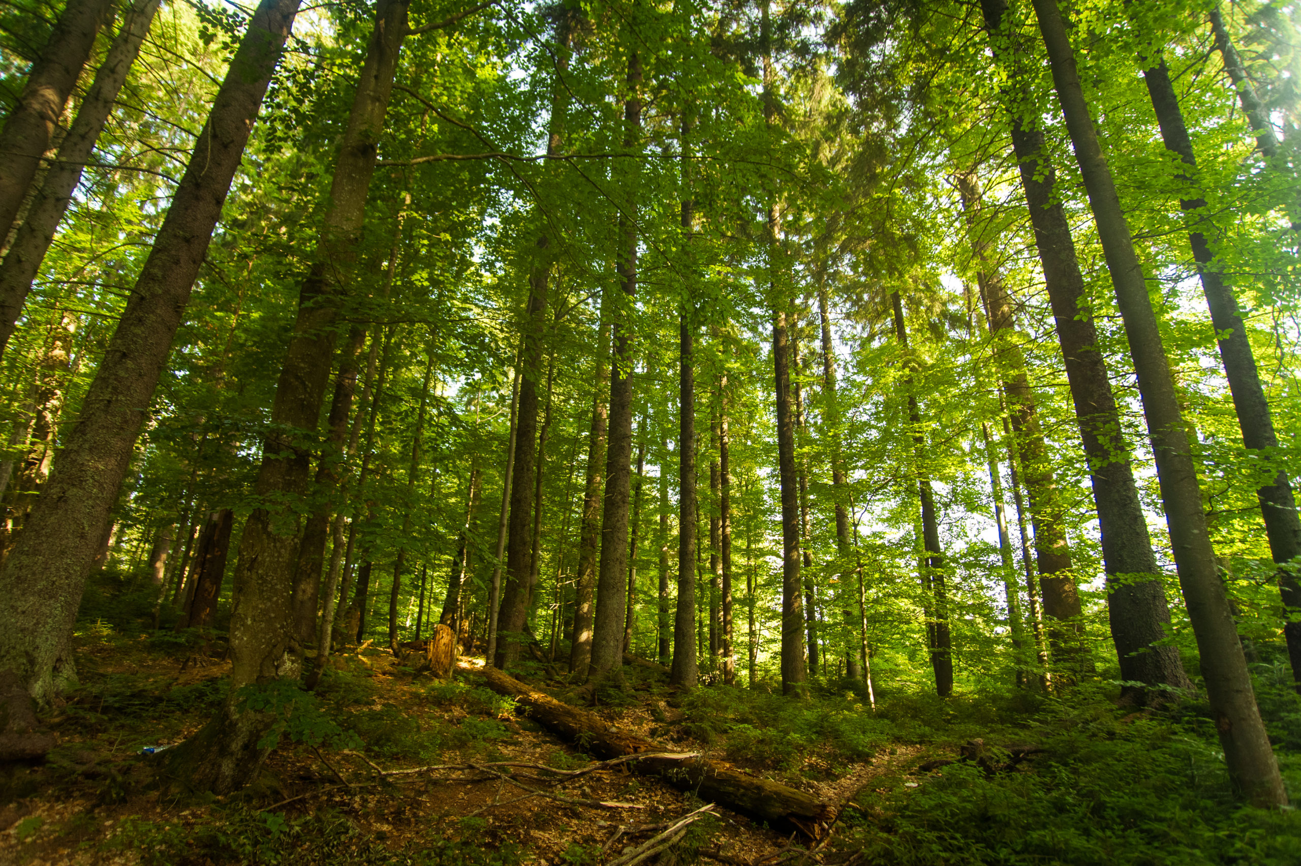 groupement forestier d'investissement