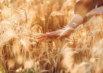 Agri Ethique : quand le commerce français devient équitable et durable